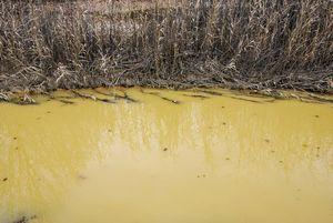 日本でも川が牛乳みたいに白く汚染・・・本当に牛乳だった!=中国メディア