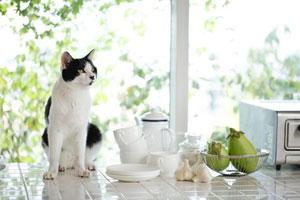 日本人はなぜ猫好きなのか 日本人は「自分を表に出さないから?」=中国