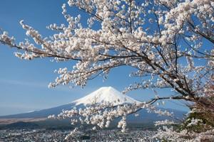 こんなに魅力があれば当たり前! 中国人が日本旅行を好む理由=中国報道