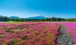 日本の清潔さは「訪日せずには理解不可能」、そして「目撃すれば敬服不可避」=中国