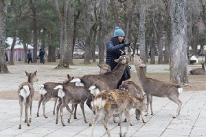 奈良公園の鹿はなぜ「中国人にばかり噛み付くのか」=中国メディア