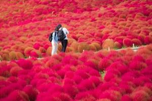 中国でその辺に生えている「草」が、日本で大人気な理由=中国メディア