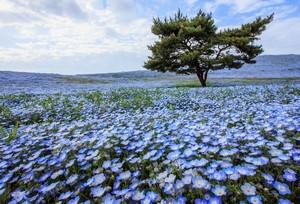 四季を通して花が咲き乱れる日本の公園、ここはまさに「花の天国」だ=中国メディア