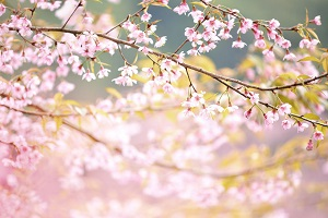 日本の四季が中国人を魅了、「四季それぞれに魅力があって・・・」=中国メディア