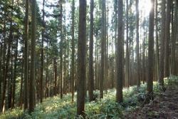 日本が中国から割り箸を大量輸入する一方で、日本から中国に大量の木材が輸出されている!=中国メディア