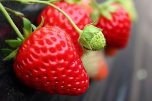 中国のイチゴより日本のイチゴのほうが美味しい! なぜ日本はイチゴの商業化に成功したのか=中国