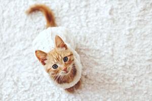 日本の猫は幸せだ! 「勤務時間に上限があって、人より気にかけられている」=中国