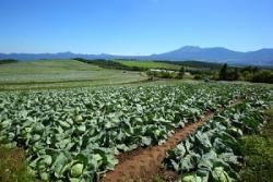 日本の厳しい基準のおかげで品質が高まった! 山東省の日本向け野菜輸出が急増=中国メディア