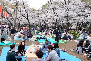 日本の「花見」は単に桜の花を見るにあらず、もっと奥深いものだった!=中国メディア
