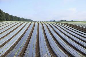 知っていたか? 日本の農業はこんなにも洗練されていた=中国メディア