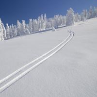 我々が日本にスキーをしに行くべき理由はこんなにある=中国メディア