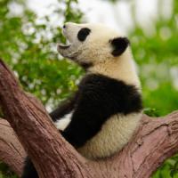 日本人「中国4000年の歴史」中国人「違う! 5000年!」 7月5日の中国記事トピックス