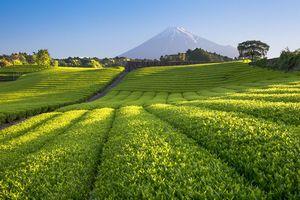 遣唐使を通じて「茶」を手にした日本、中国は「今や日本から学ぶべき立場」