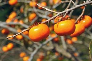 日本の果物に驚異的な高値が付けられる、3つの理由=中国メディア