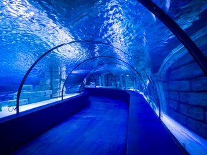 中国高速鉄道が完成を目指す「世界初の海底高速鉄道トンネル」=中国メディア