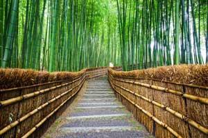 中国人は好んで日本へ旅行に・・・増える中間層、まだ大きな伸びしろ