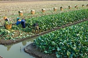 わが国の農業技術、20年前と同じ・・・都会ではハイテク機器だらけなのに=中国メディア