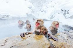 雪の降る中で入る北海道の露天風呂は、まるで天にも昇る心地よさ=中国メディア