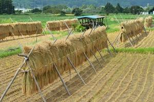 視察して分かった、日本と中国の農業における様々な違い=中国メディア