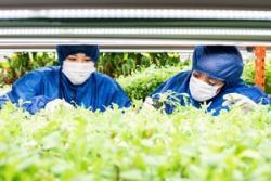 日本の農業が世界先進レベルと言われる理由はどこにある?