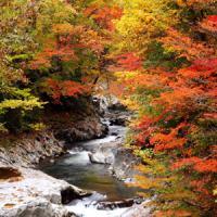 京都や日光だけじゃない! 外国人観光客にもおススメしたい「紅葉旅行が人気のエリアランキング」