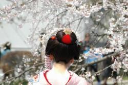 日本の舞妓や芸妓は、美しくて窒息しそうだ!