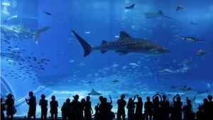 うそだろ? 日本の水族館では展示物に蓋がない・・・これが民度か=中国