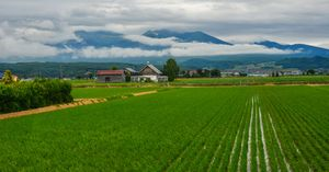 日本の土地を買う中国人投資家、中国ネット民はどう見ているのか=中国