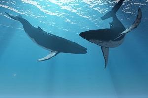 日本人は世界から反対されているのに、なぜ捕鯨に固執するのか=中国