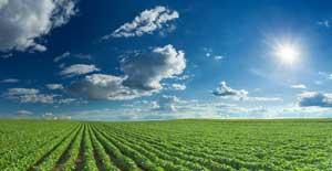 日本の農業は参考になる!同時に反面教師とすべき点もある=中国