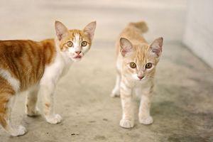 東京で行われたあるイベントを見て、日本人のネコ好きを改めて感じさせられた=中国メディア