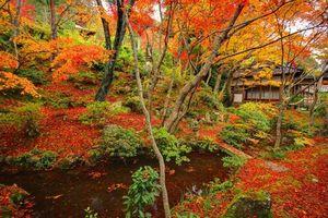 美しすぎて美味しすぎる・・・中国人観光客が堪能すべき、日本の「秋」=中国メディア