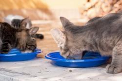 「財産を猫に残したいのですが、いいですか」=中国メディア