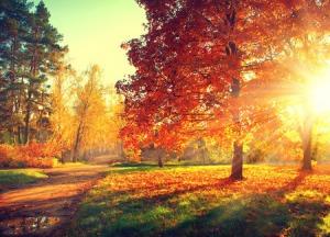 紅葉の美しさは異常、「日本の秋」を体験するべし=中国メディア