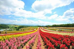 日本人は商売がうまい・・・中国人が舌を巻く「日本の農業の凄さ」