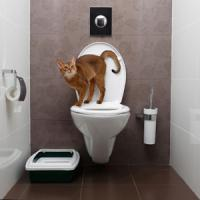 恥ずかしくて顔を上げられない・・・日本のトイレには「中国語の注意書き」がある=中国報道