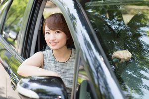 「金持ちはドイツ車を買い、そうでない人は日本車を買う」と言われる理由は?=中国メディア