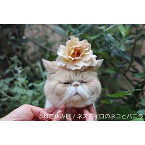 日本の癒し猫たちが海を越える! 海外初・ねこ休み展 in 香港
