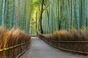 日本に存在する「静けさや秩序正しさ」、自分を律する精神のおかげ=中国メディア