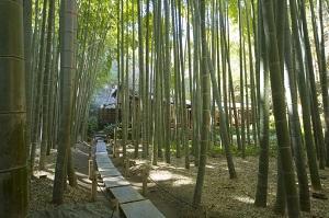 こ、これは一体何なのか・・・日本にある「信じられないお寺」に中国人も仰天 !?
