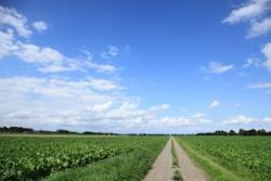 日本の農業技術は世界の先端を行くが、食料自給率は先進国で最低レベルだ=中国メディア