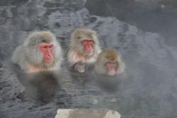 日本のサルはどうして温泉が好きなの? 理由は簡単だ=中国メディア