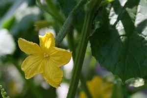 新型コロナ禍のなか、日本で家庭菜園がブームになるのはなぜ?=中国メディア