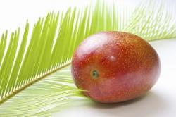 今年もまた1個20万円の「超ぜいたくマンゴー」が出現した・・・日本はやっぱり不思議な国だ=中国メディア