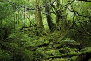 食用のシカ、サル、そして杉・・・神秘と魅力に満ちた日本の「島」=中国メディア