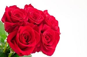 情人節(バレンタインデー)に花が値上がり その理由は?=中国メディア