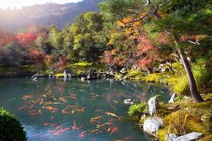 コンパクトなのに驚くほど豊かな観光資源・・・中国人が日本に行きたがる理由=中国メディア
