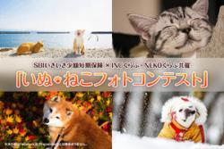 「いぬ・ねこフォトコンテスト」開催 入賞作品は2018年SBIいきいき少短オリジナルカレンダーに