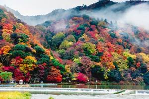 中国人が日本旅行を好む理由、「神様のような待遇を受けられるんだもの!」=中国メディア