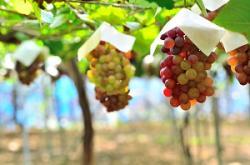 新しい品種、技術、経験・・・日本の農業が急発展した要素とは?=中国メディア